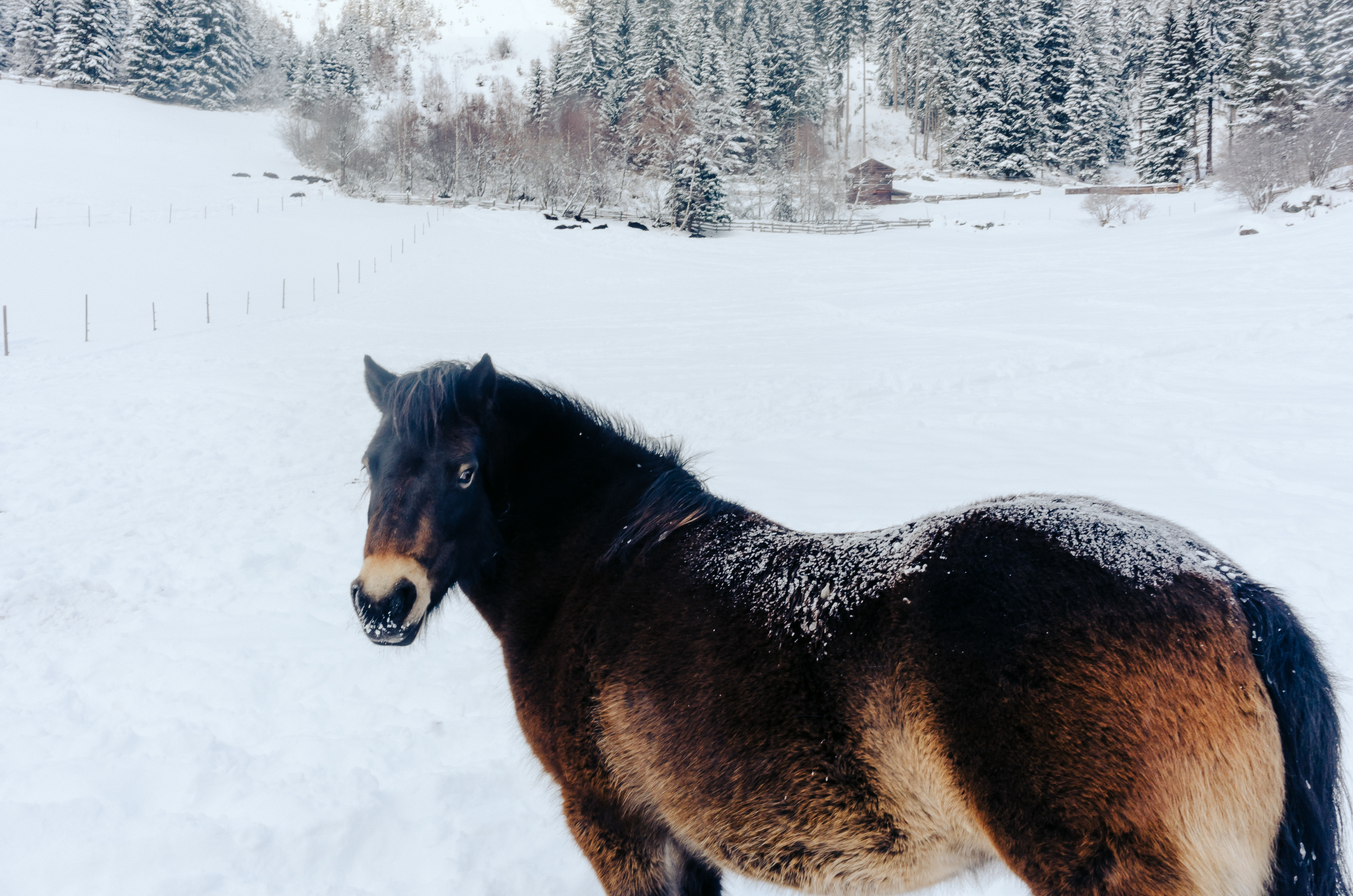 Horse In Winter Free Photo On Barnimages
